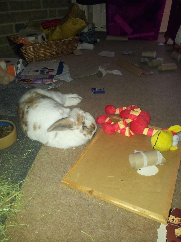Banacek is a free range bunny