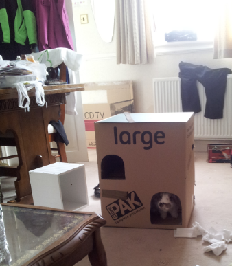 rabbit cardboard castle