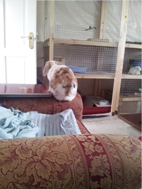 Banacek waits for Jason to come home with carrots.