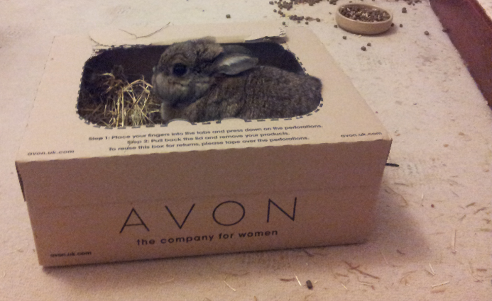 rabbit hay box