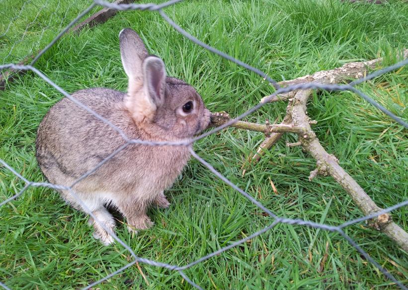 Fifer loves chewing sticks
