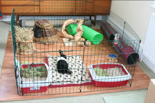 This is the sort of awesome rabbit home you can build using the panel runs I mentioned above.