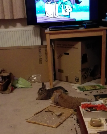 Fifer and Katie, unwanted rabbits.