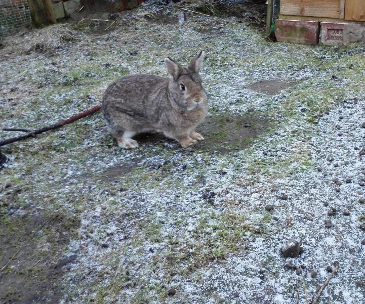 Fifer, enjoying a brisk morning hop.