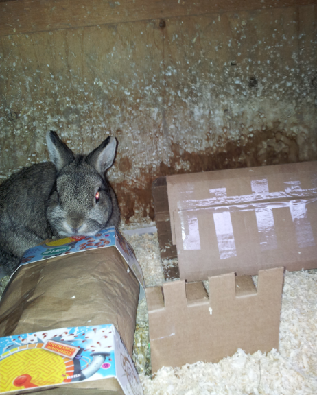 Neville playing in his new bunny castle cardboard toys last November.