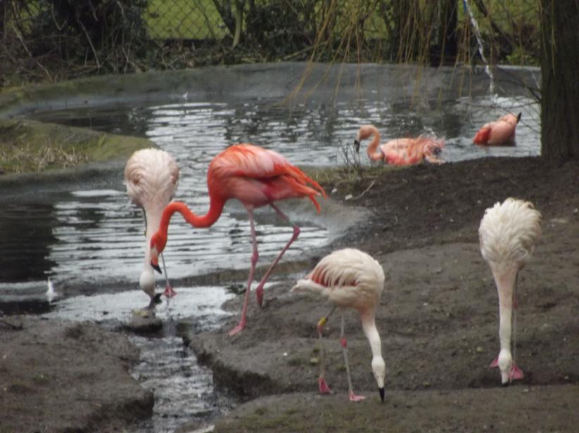 flamingos at flamingoland