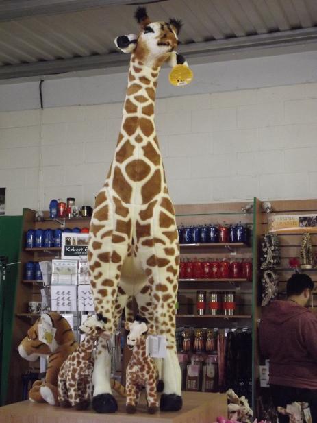 giant giraffe at flamingoland