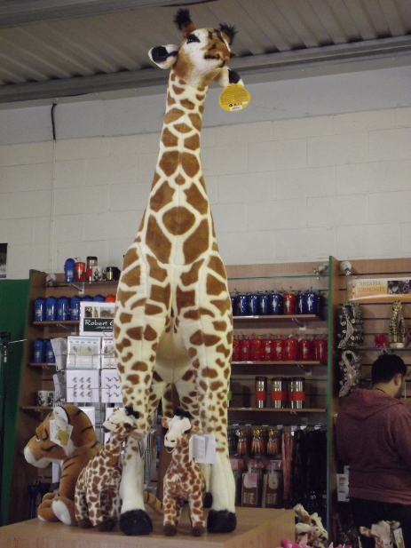 giant giraffe at flamingoland