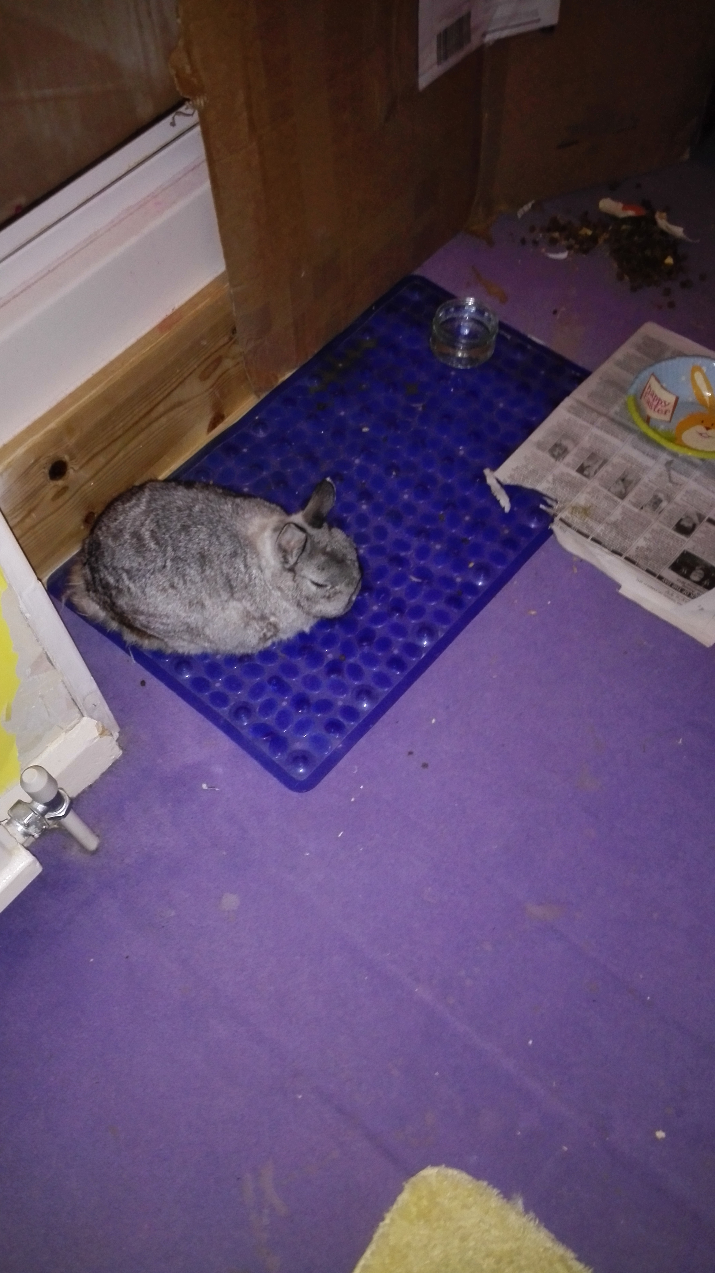 Sebastian on the shower mat, having rearranged his living space to his satisfaction.