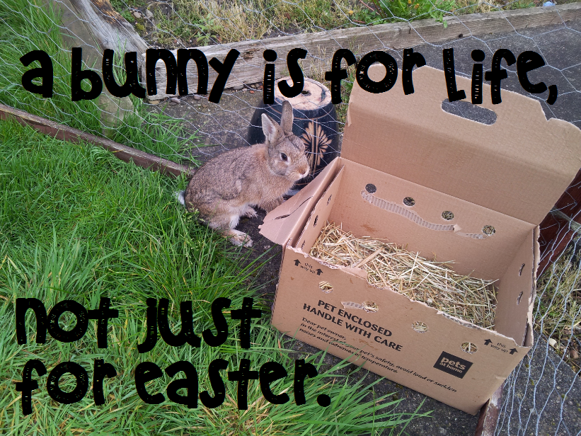BUNNY is for LIFE not just for EASTER
