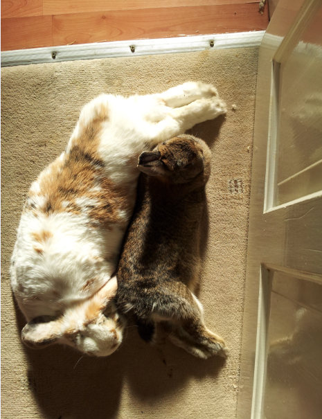 Sunbathing double flopsy, another perfect score for Banacek and Cleo.