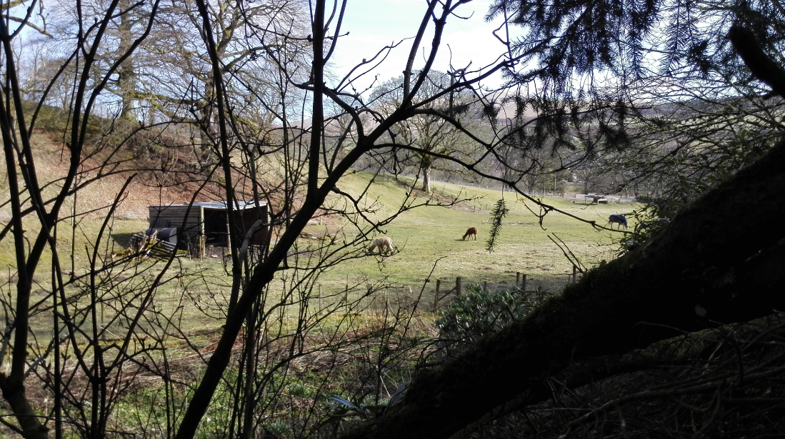 What castle hotel would be complete without a llama farm on the other side of the ravine where the three waterfalls flow.