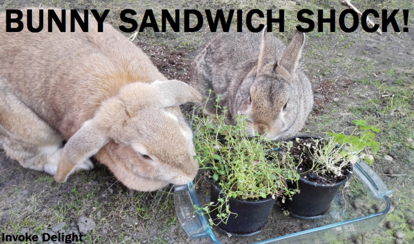 Katie, left and Fifer, right, made a bunny sandwich with another rabbit.