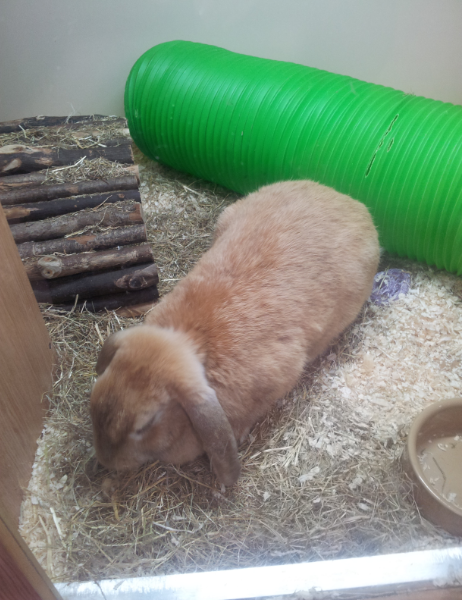 This was Katie Bunny's enclosure in the adoptable area at Pets at Home