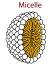micelle diagram