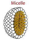 micelle diagram