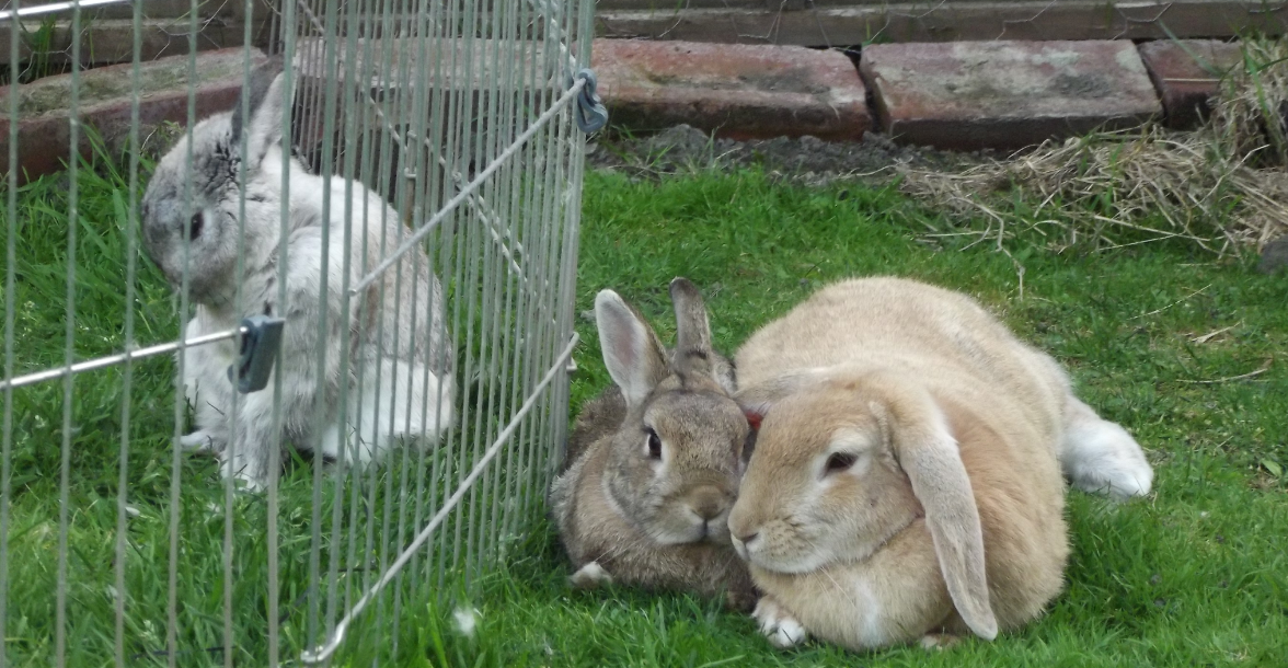 Look at the bunnies... become one with the bunnies... the bunnies are all...