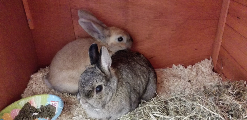 New bunny timmy1