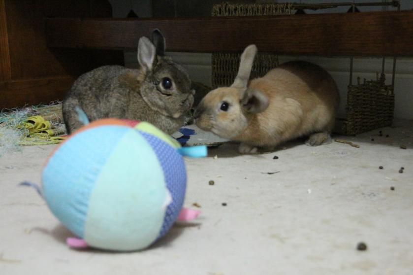 timmy bunny 1