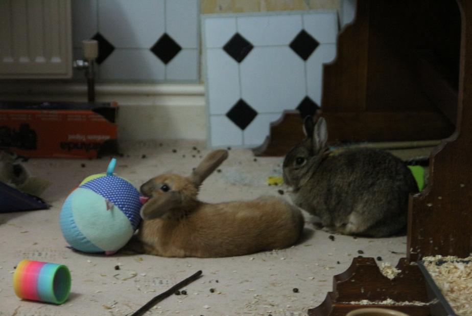 timmy cleo ball