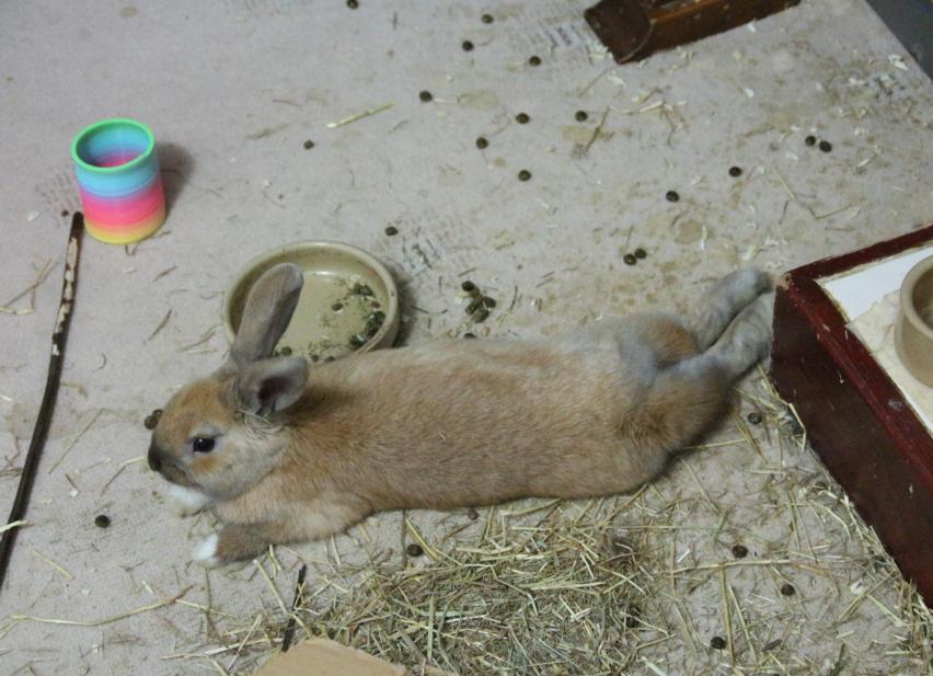Timmy flopsy