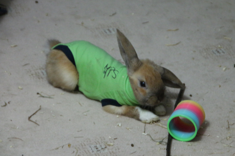 Timmy in romper suit