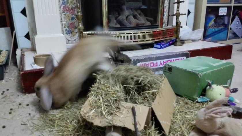 timmy runs fast.png