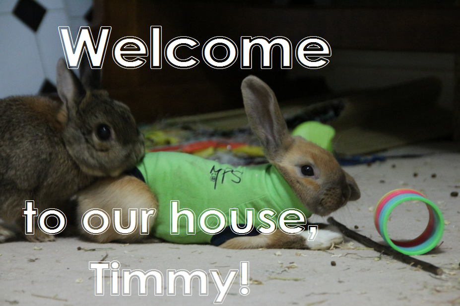 welcome Timmy