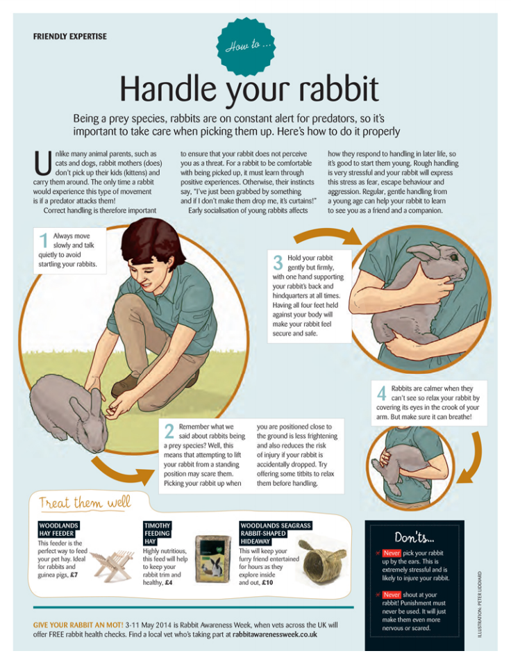 how to handle your bunny rabbit