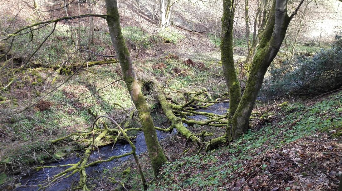 stream tree bridge2