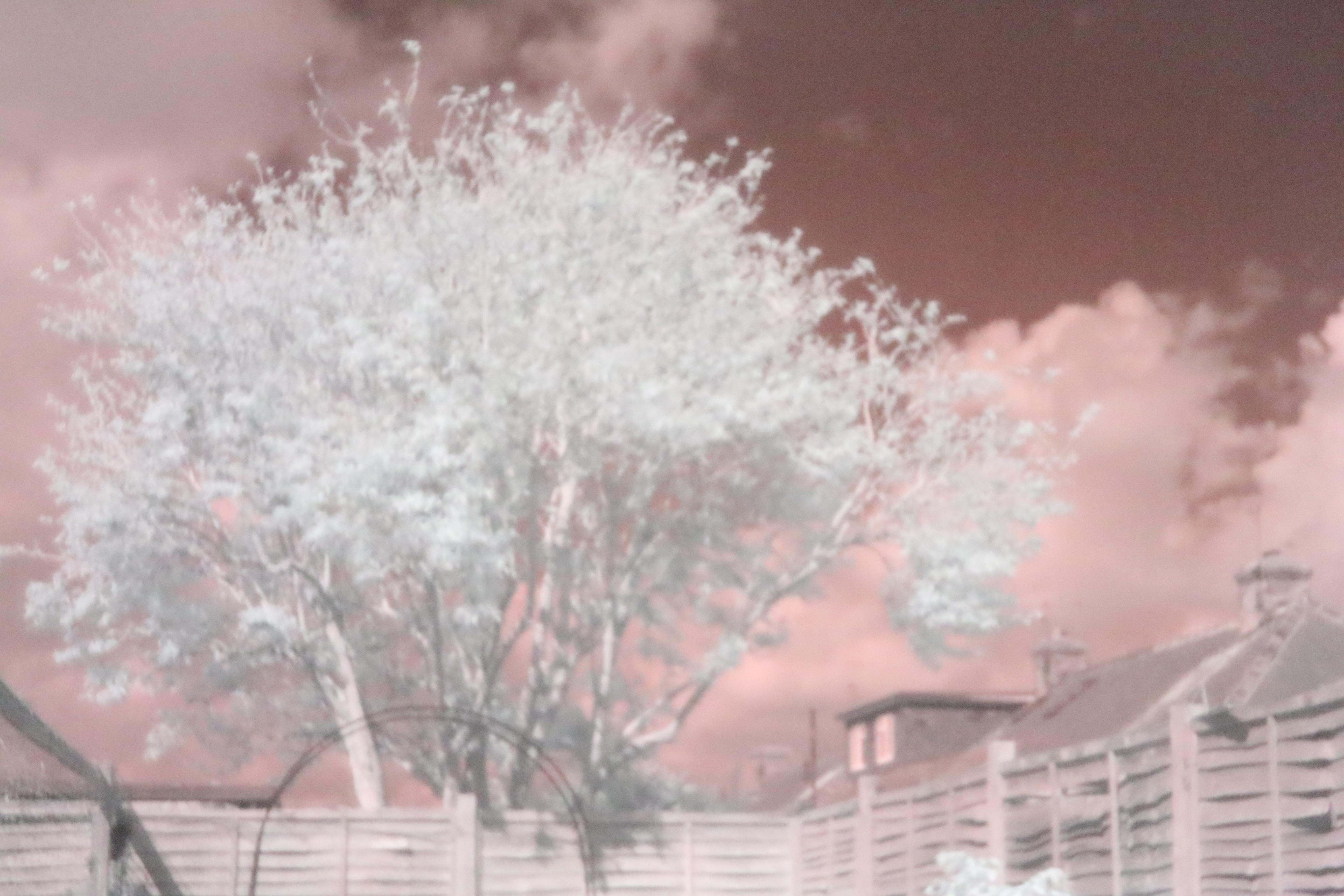 infrared photo canon eos 650d