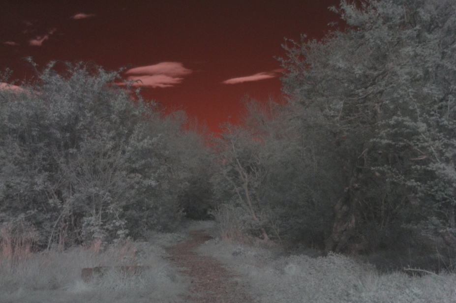 infrared photography infra red photography photo