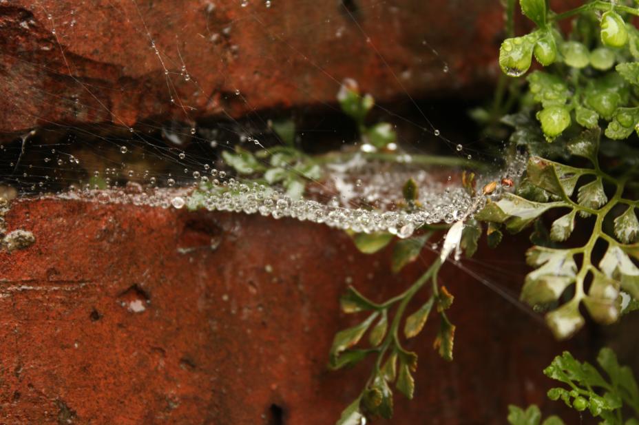 Photography cobwebs photo rain invoke delight and inspire