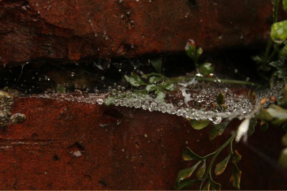 Photography cobwebs photo rain