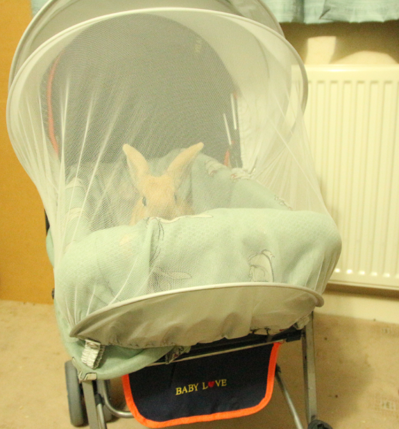 how to make a rabbit stroller DIY houserabbits