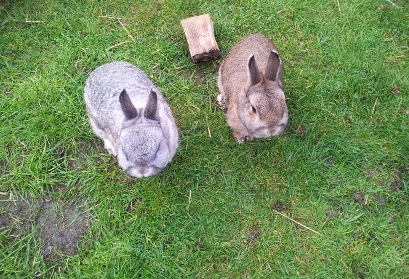 Sebastian and Neville rabbits