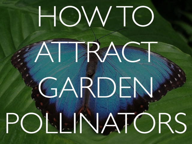 5 ways to attract pollinators to yourgarden